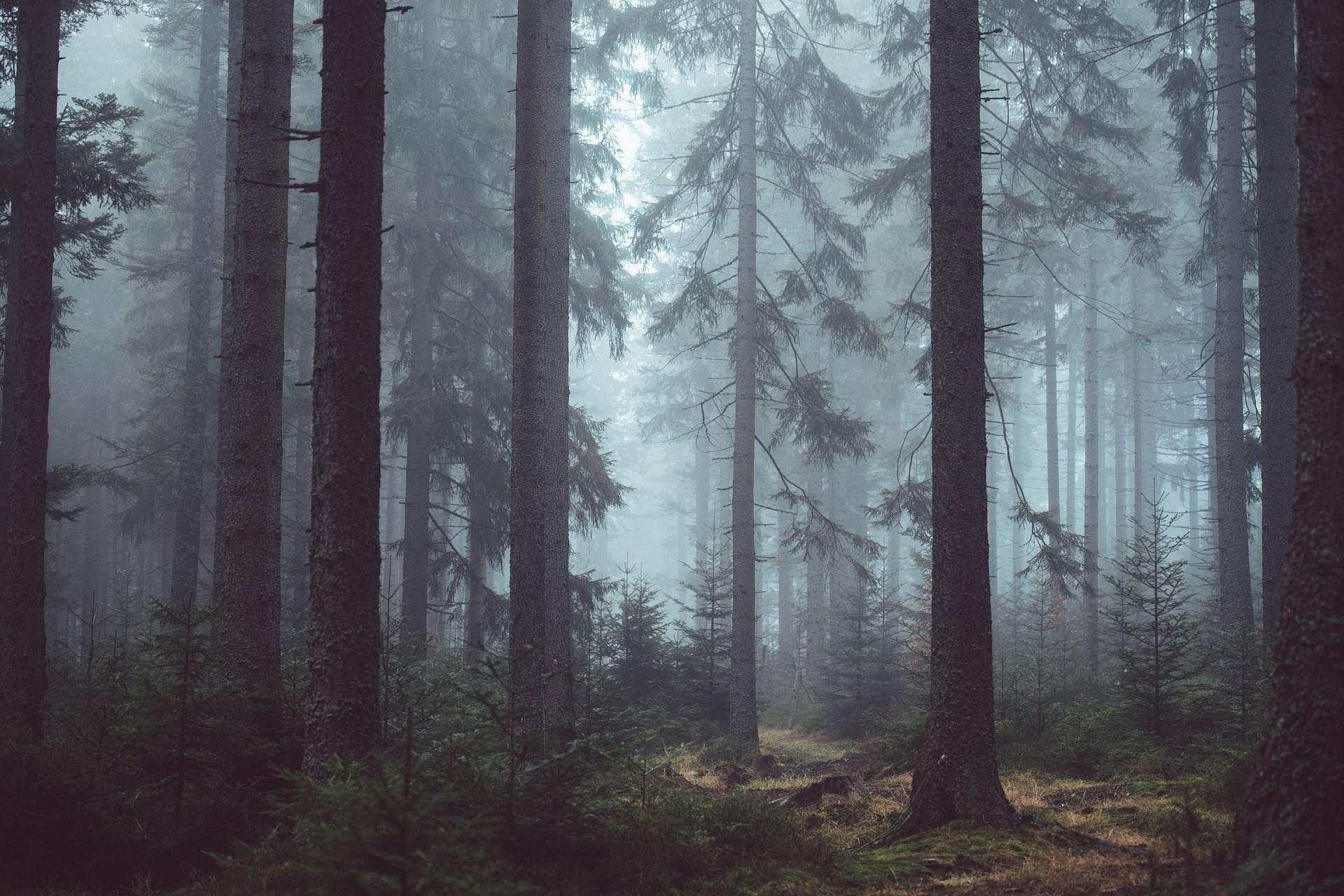 Wald Luzern
