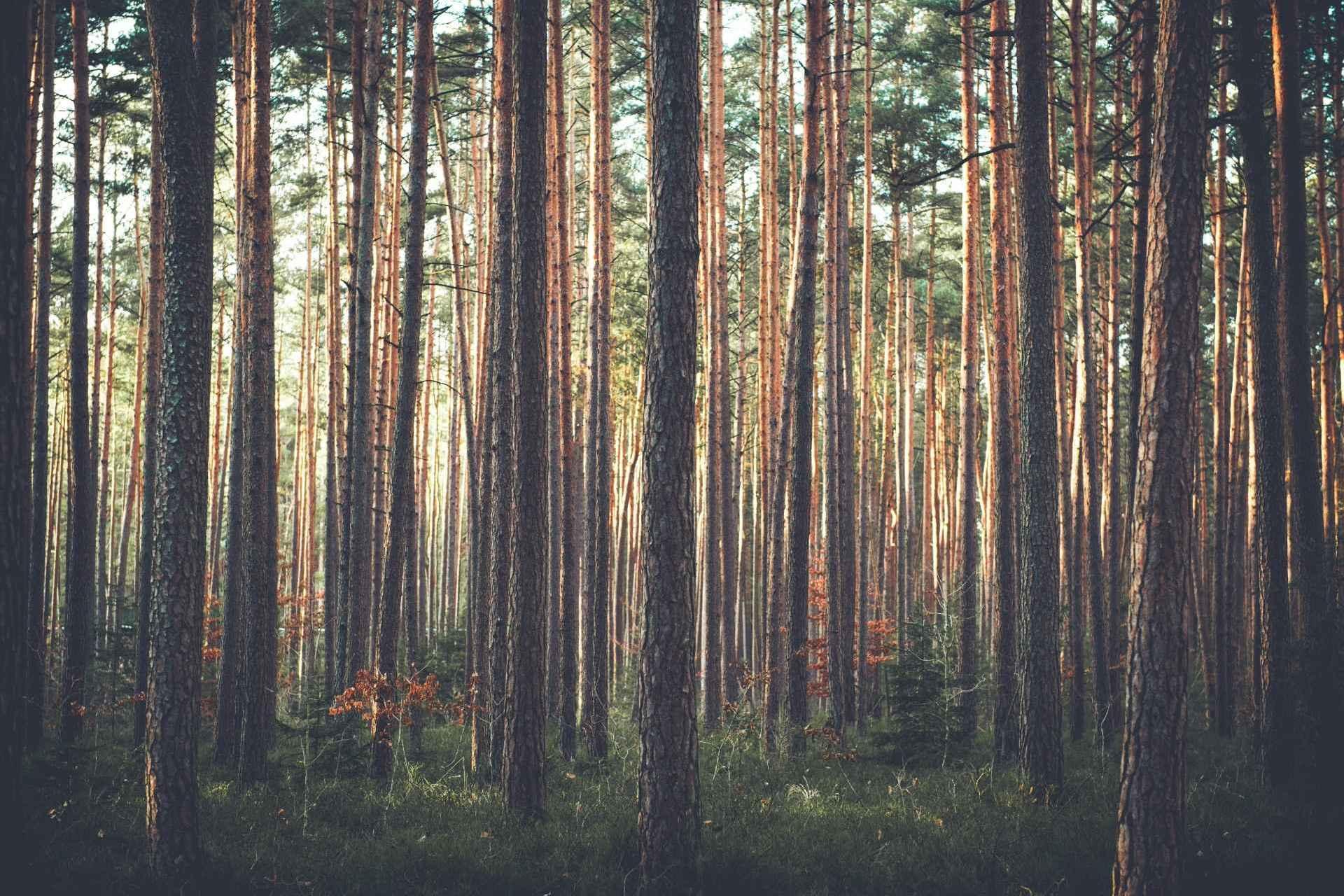 Bäumer Schweiz